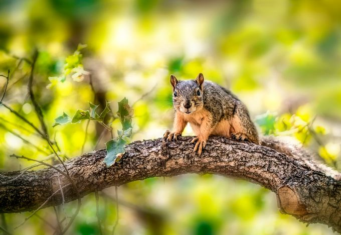 Conversation with a squirrel by DJLee - TiltShift Effect Photo Contest