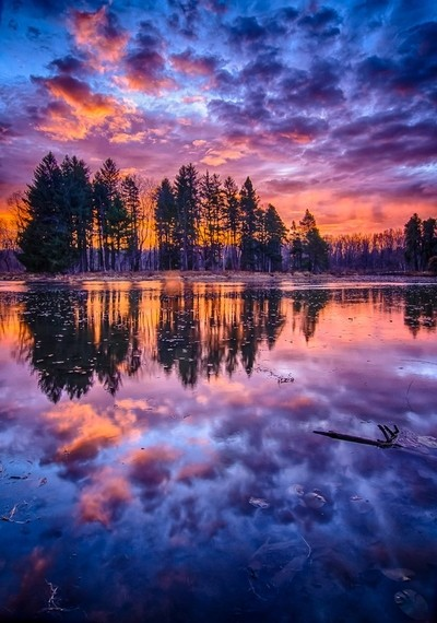 Pine Reflections at Sunrise