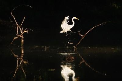 Heron Jumping