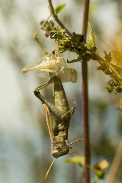 Grasshopper sheds