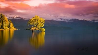 Willow Tree Lake Wanaka