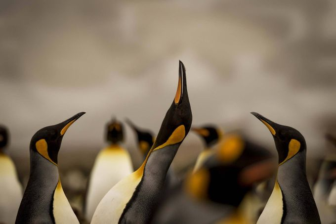 Look up ! by RussellD - Wildlife Photo Contest 2017