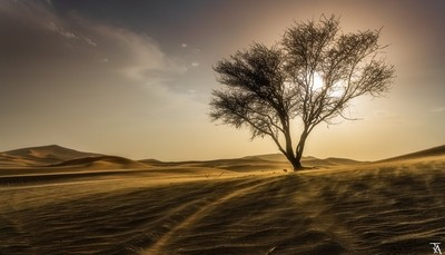 The Arabian Tree Sunset