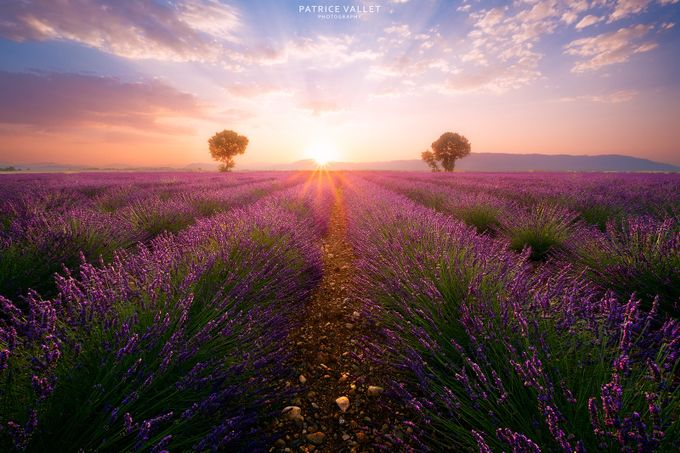 First sunrays on lavender fields by patrice-vallet - Depth In Nature Photo Contest