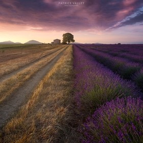 A sunrise on a beautiful lavender field