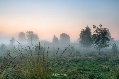 Misty Sunrise Grasses