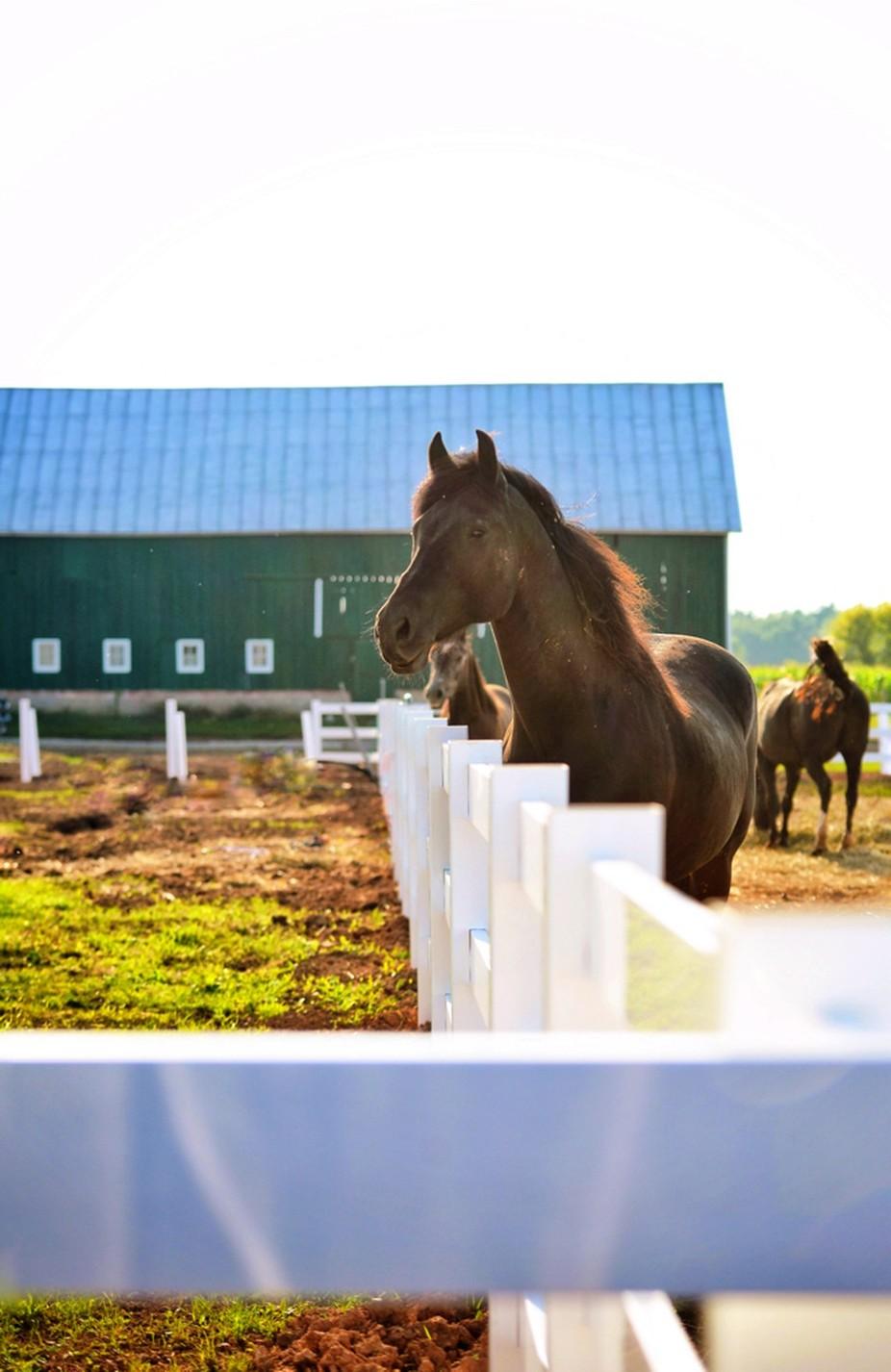 Observant Horse
