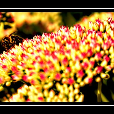 Bee on a beautiful flower.