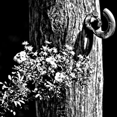 Monochrome picture of post and flowers.