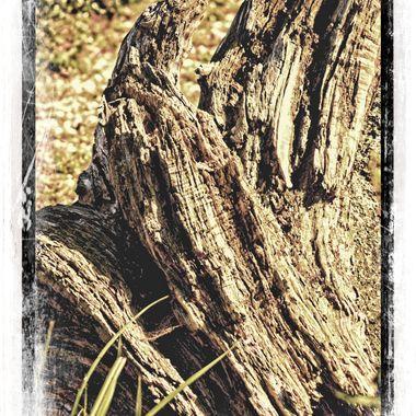 Lump of wood rotting away.