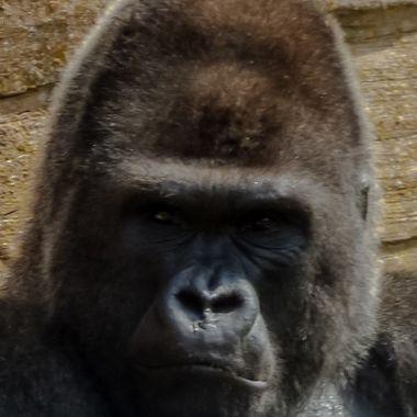 Picture taken in Valencia's zoo, Spain