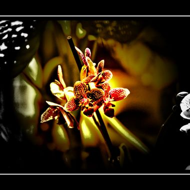 Orchid manipulated taken at Dortmund Zoo 29th Aug 2017.