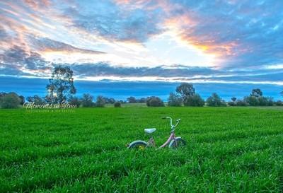 009A47789 Bike in Barley Crop...