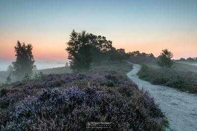 Misty Heather Path De Hamert