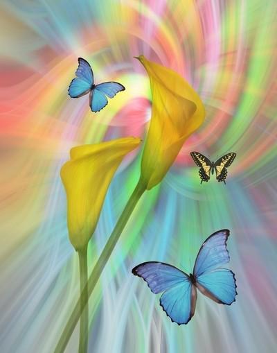 Cala Lilies and Butterflies