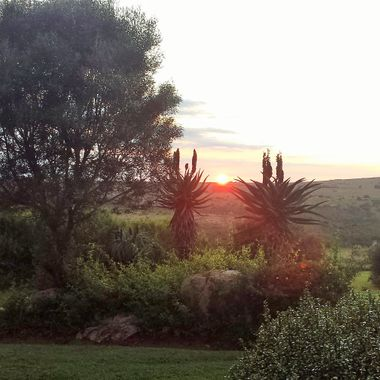 First Light between the Aloes