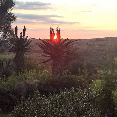 Sun-up between the Aloes