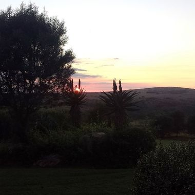 Sun Rise behind the Aloes