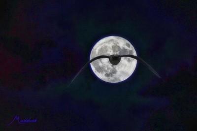 gull moon