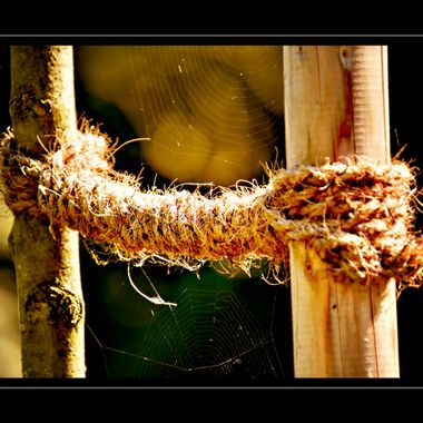 Cob webs spun between2 posts and some rope.