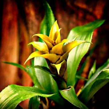 Tropical plant in light source.