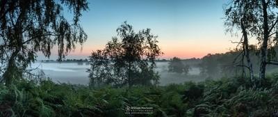 Panorama Misty Fern View