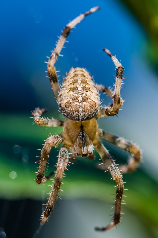 Incy Wincy. by Anthonypmorris - Macro Games Photo Contest