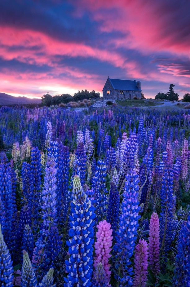Purple Haze || Church of the Good Shepherd, New Zealand by capturezeworld - Bright Colors In Nature Photo Contest