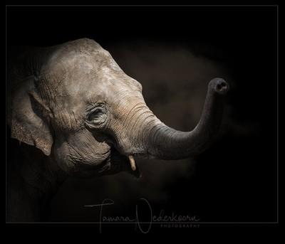 © Tamara Nederkoorn Photgraphy