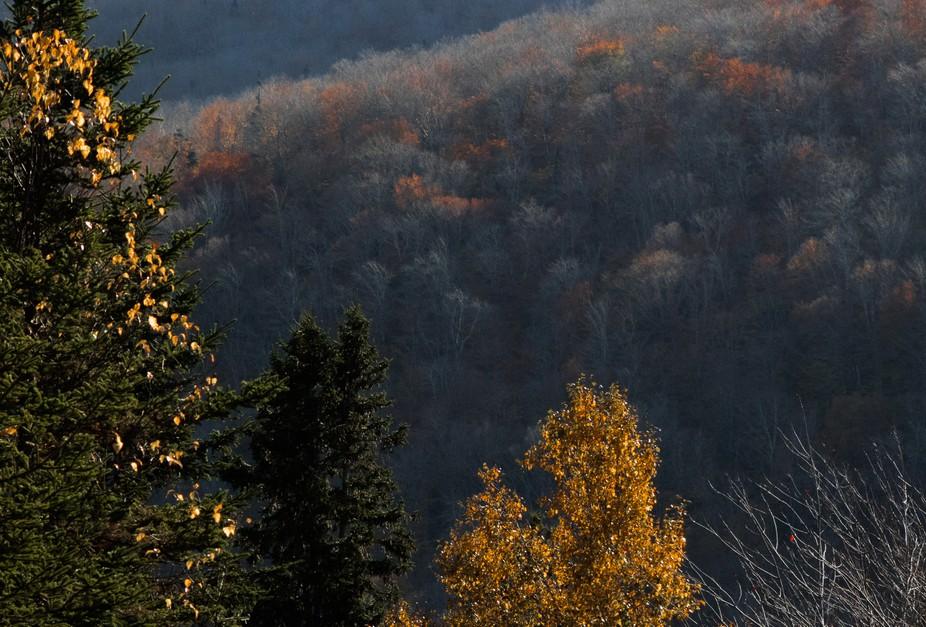 Early december light