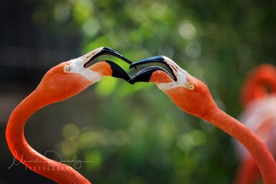 Beak Speak
