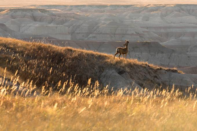 Morning in the badlands by LeviLangerakPhotography - Isolated Photo Contest