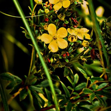 Yellow flowers in bloom.
