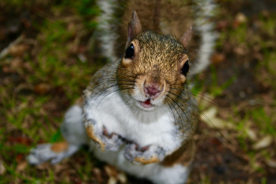 squirrel curiosity meme