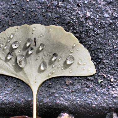 A leaf with some water droplets on it.