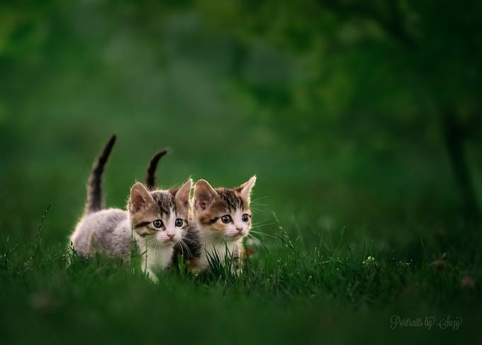kittens  by suzymead - Covers Photo Contest Vol 42