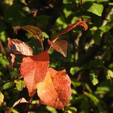 Only Sept the 2nd and the Autumn colours have started arriving.