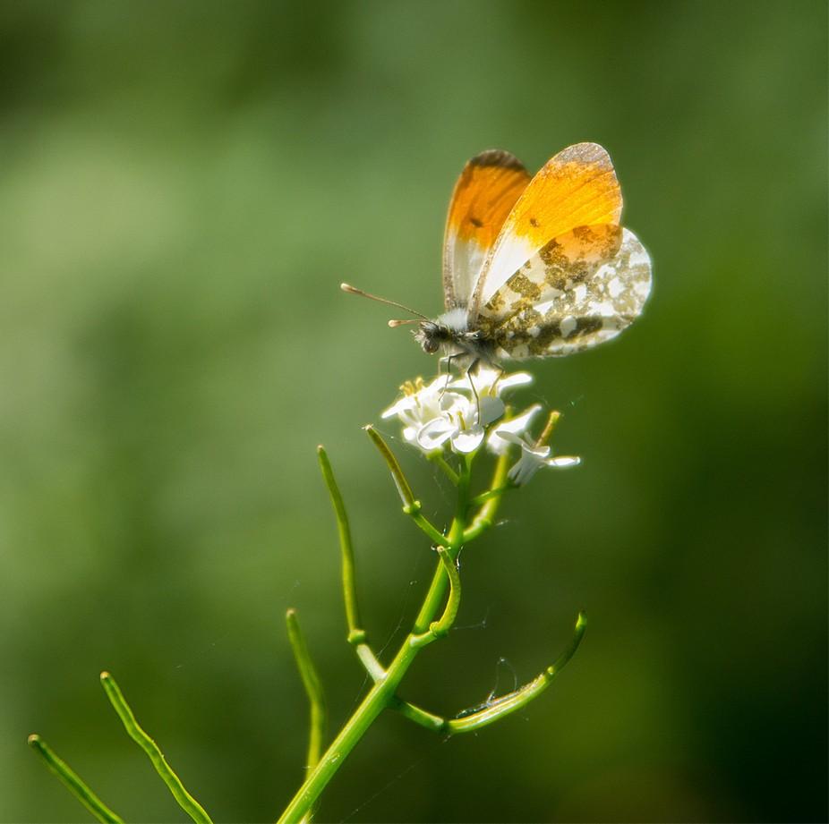 DSC_2901x1920-Schmetterling