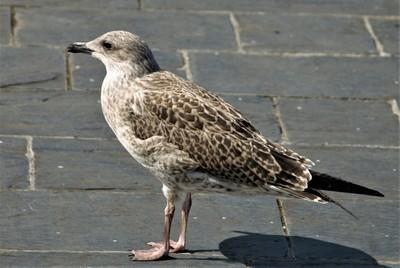 DSC_0078 Bird 1