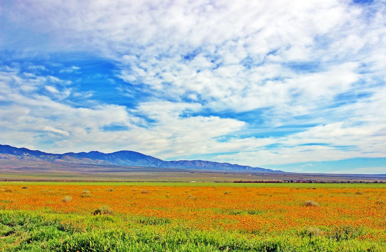 High Desert Flowers