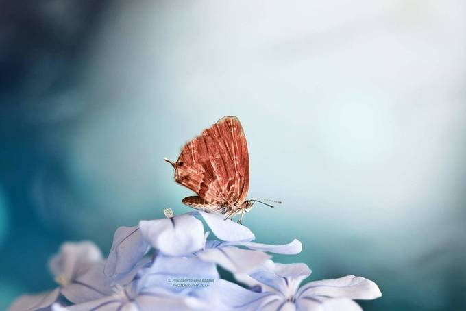 Let's dream....     by PriscilaOctavianaBadalut - Macro Games Photo Contest