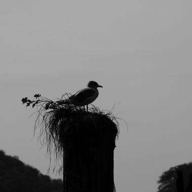 A black and white silhouette of a seagull roosting.