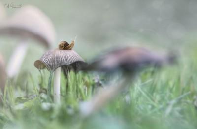 Land of Magical Mushrooms