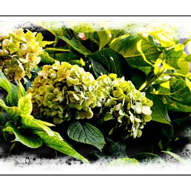 Lovely flowers in Samos.