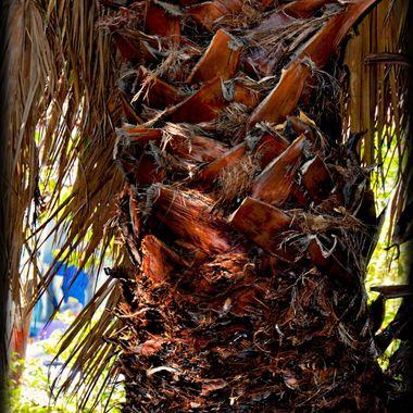 A dead Palm Tree but plenty of Colour