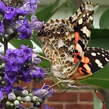 Reversible Butterfly?