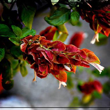 Beautiful foliage from Samos.
