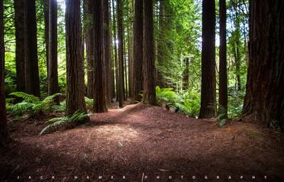 green redwoods