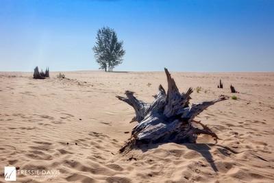 Sand Weathered Tree Stump