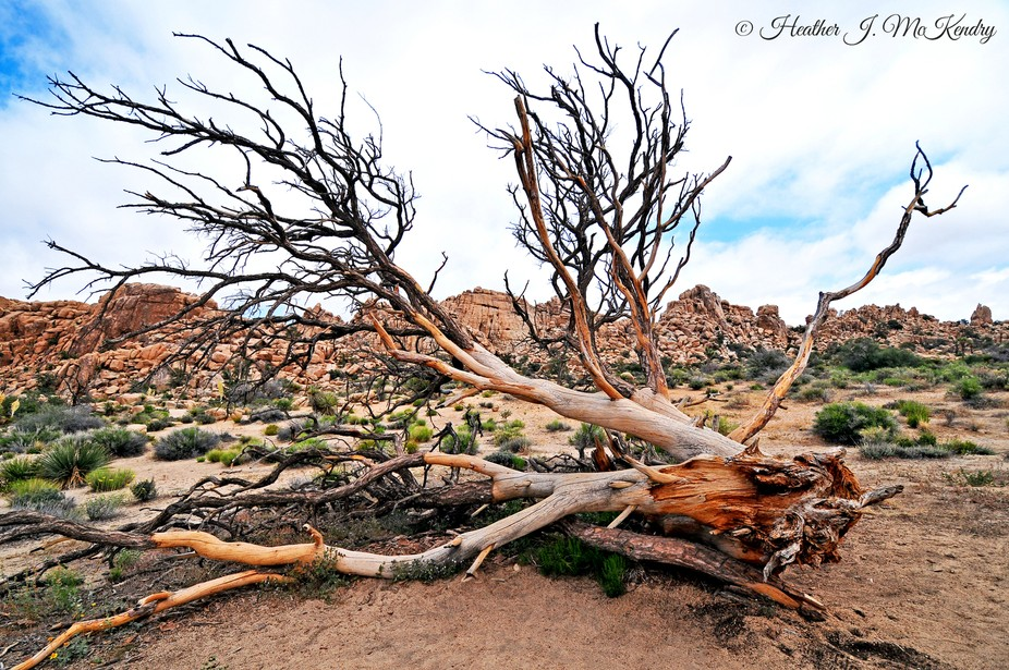 A cool hiking loop at Joshua Tree. This was literally, a hidden valley, where a great deal of cat...